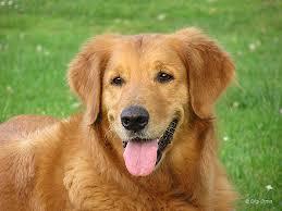 saucey dog